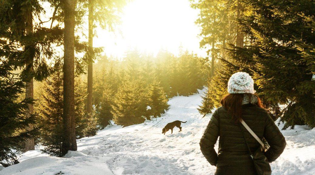 Viaggiare col cane in Montagna