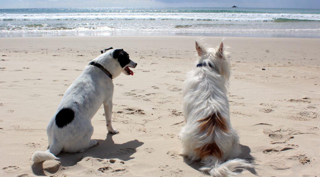 spiaggia cani puglia salento